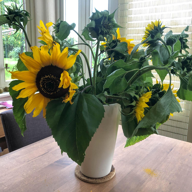 zonnebloem-zaden-kopen-4.jpg