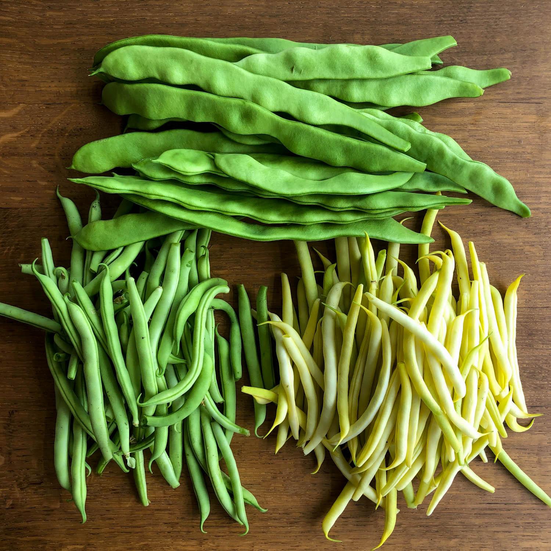 stambonen-zaden-kopen-3.jpg