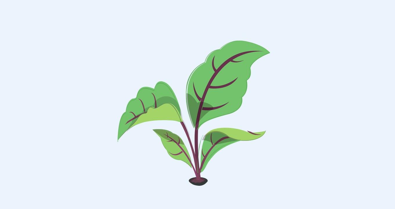 plantjes.jpg