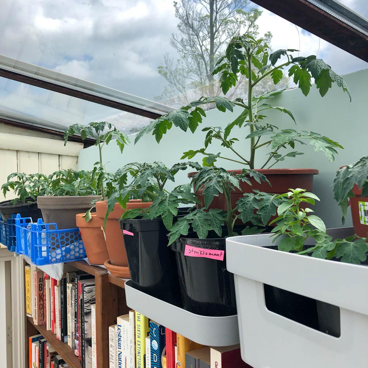 Voorgezaaide planten onder een lichtkoepel