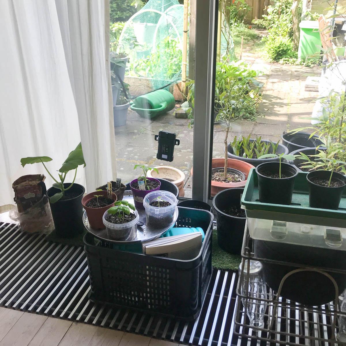 Vitrage beschermt courgette tegen te felle zon