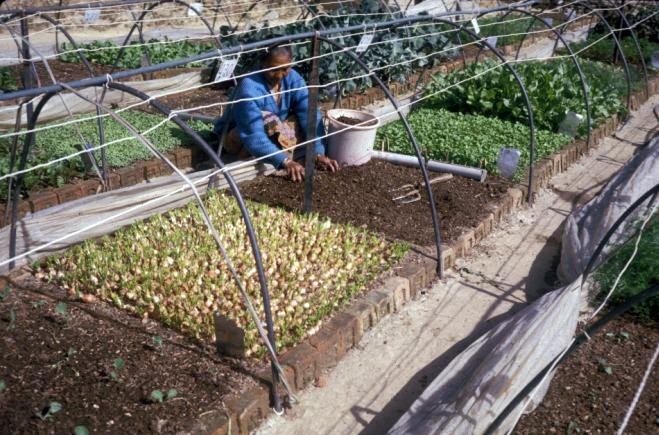 Groot SFG-project in India