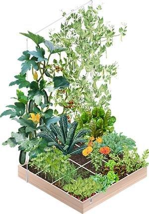 Makkelijke Moestuinbak vol groentes