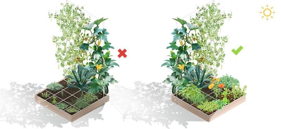 Plaats je moestuinbak zó dat je planten nooit in elkaars schaduw staan.