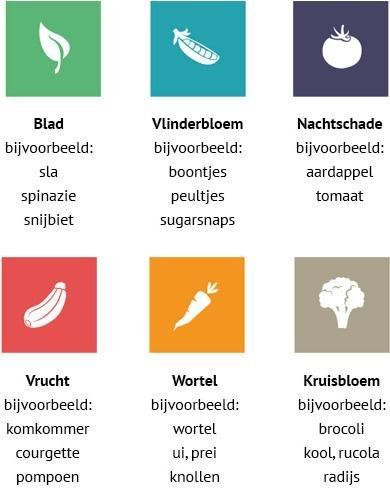 Plantenfamilies hebben in de Makkelijke Moestuin hun eigen kleur