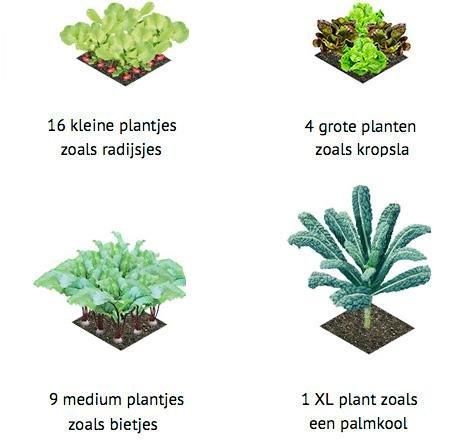 waar-welke-groente-wisselteelt-7.jpg