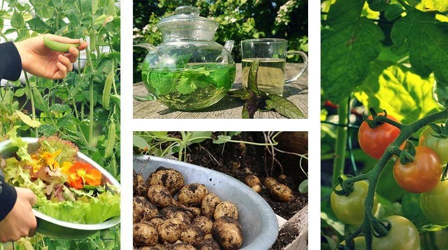Gevarieerd oogsten uit de Makkelijke Moestuin: net wat je voor je maaltijd nodig hebt