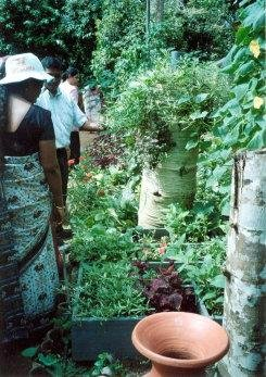 Square Foot Gardening project in Sri Lanka