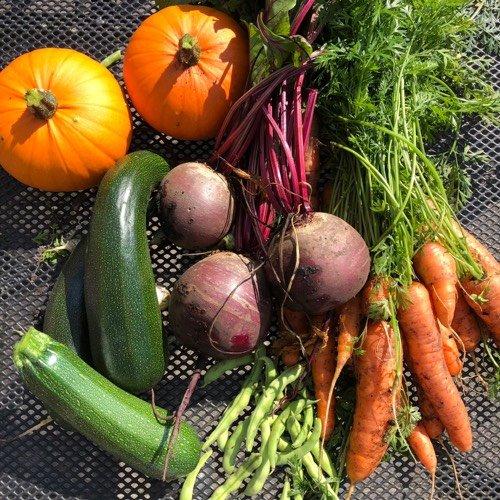 Pompoenen, courgettes en komkommers zijn super leuk om zelf te kweken