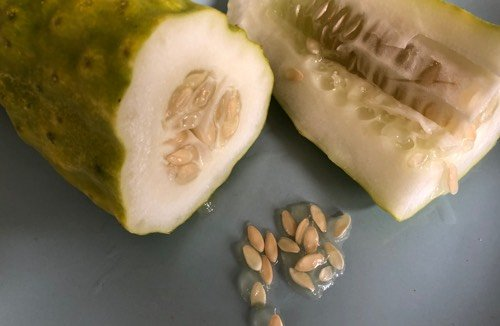 Zaden oogsten uit een komkommer