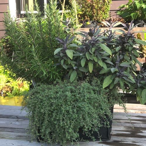 Meerdere kruindenplanten in één Makkelijke Moestuin Mini pot