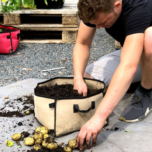 Grote opbrengst aan aardappels in een Makkelijke Moestuin Mini pot