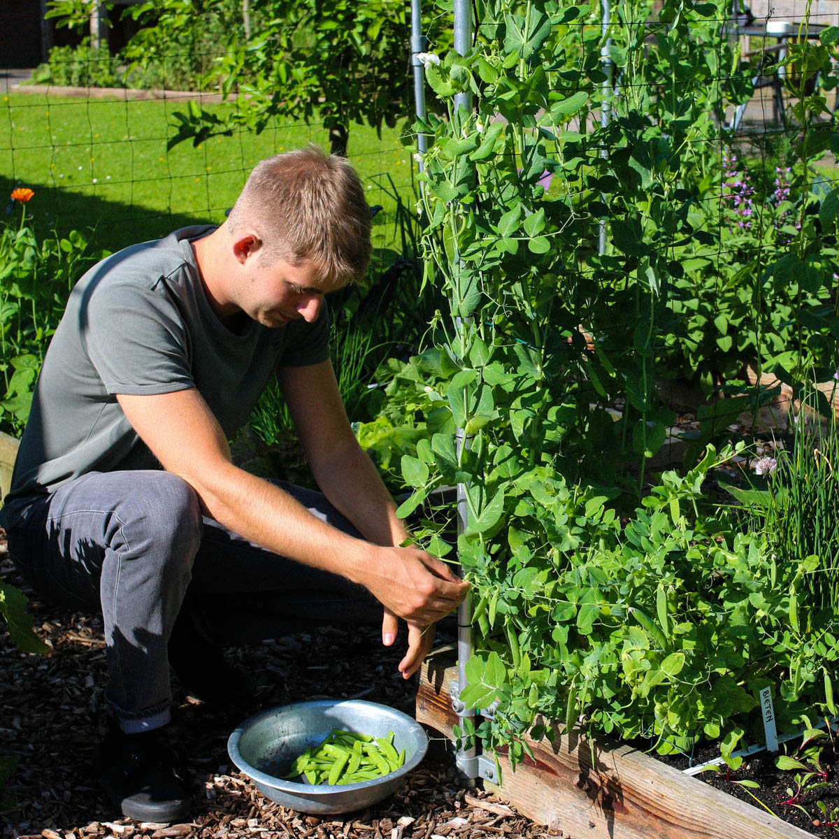 Van peultjes in de Makkelijke Moestuin oogst je minstens een maand