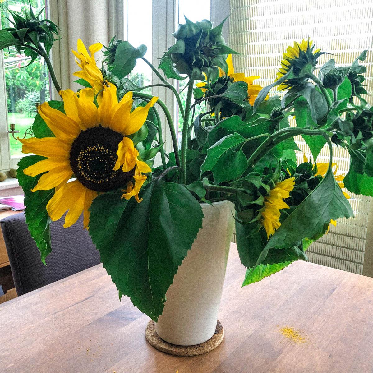 Zet zonnebloemen in een laagje heet water