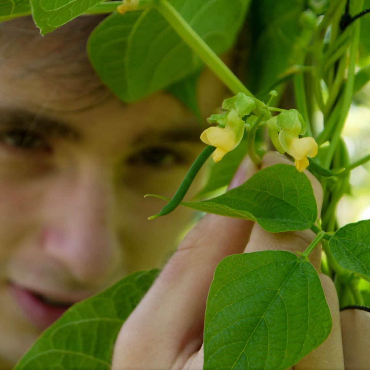 Bloemen en de eerste boontjes aan de snijbonen van de Makkelijke Moestuin