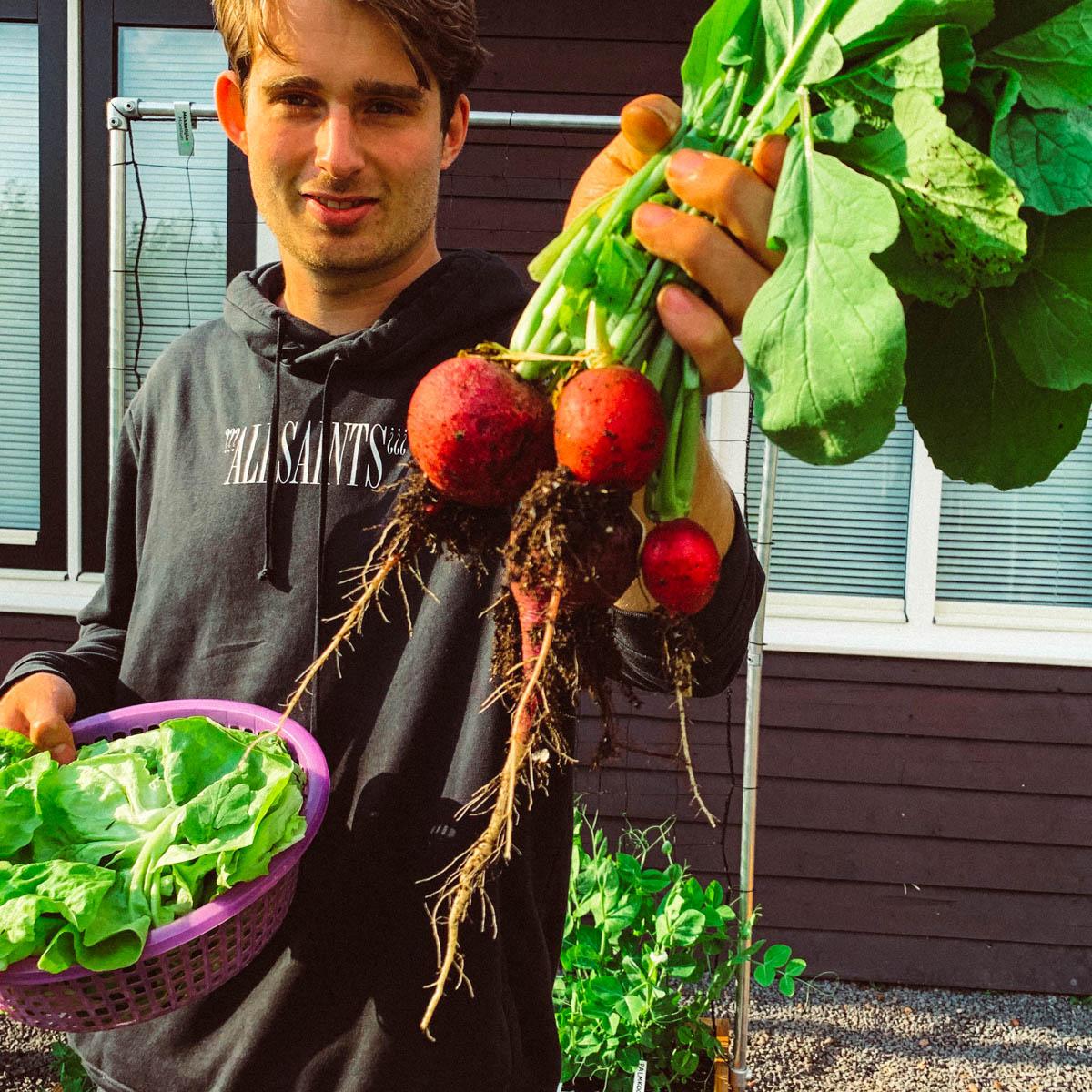 Jelle oogst de laatste radijzen uit zijn Makkelijke Moestuin
