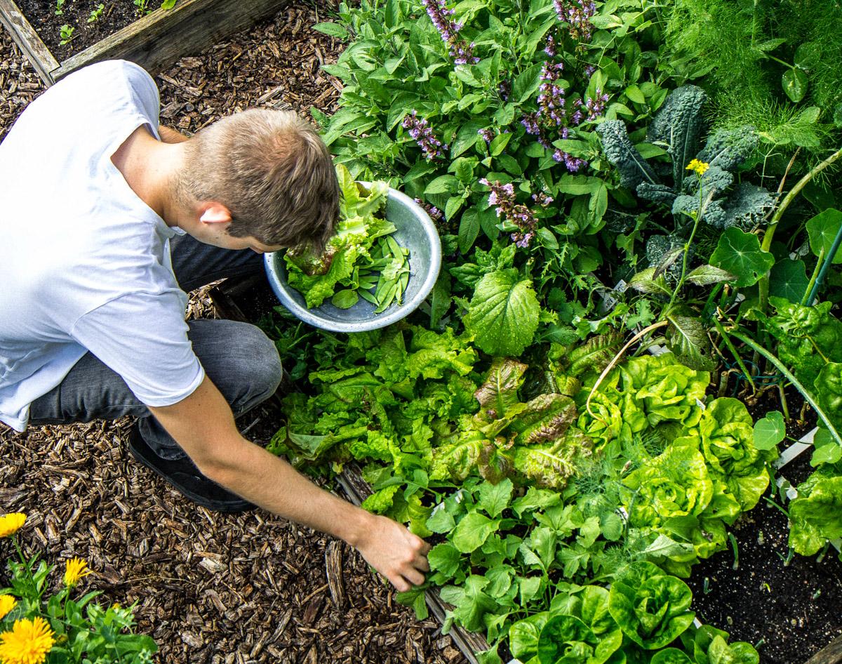Makkelijke-Moestuin-groentes-2.jpg