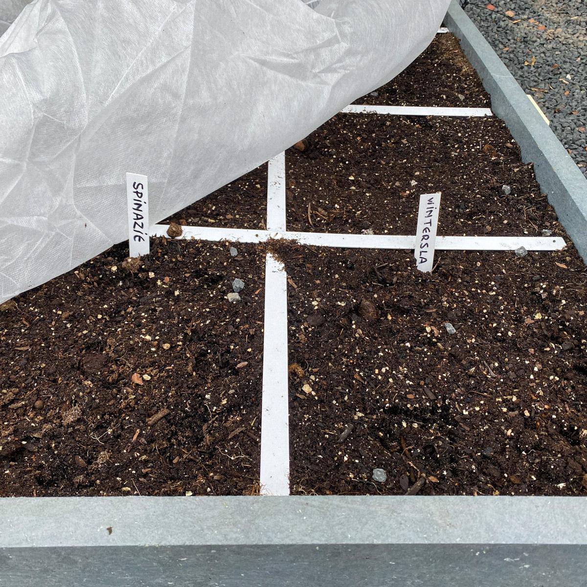 Zaailingen komen in het vroege voorjaar langzaam op