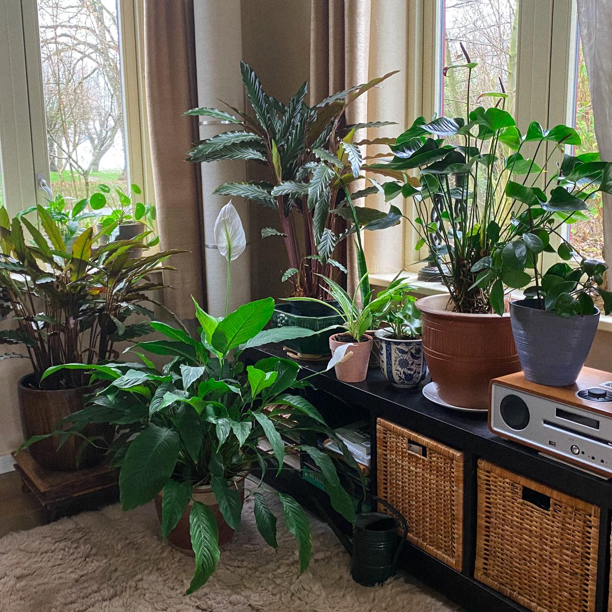 Al onze kamerplanten staan op de Makkelijke Moestuinmix