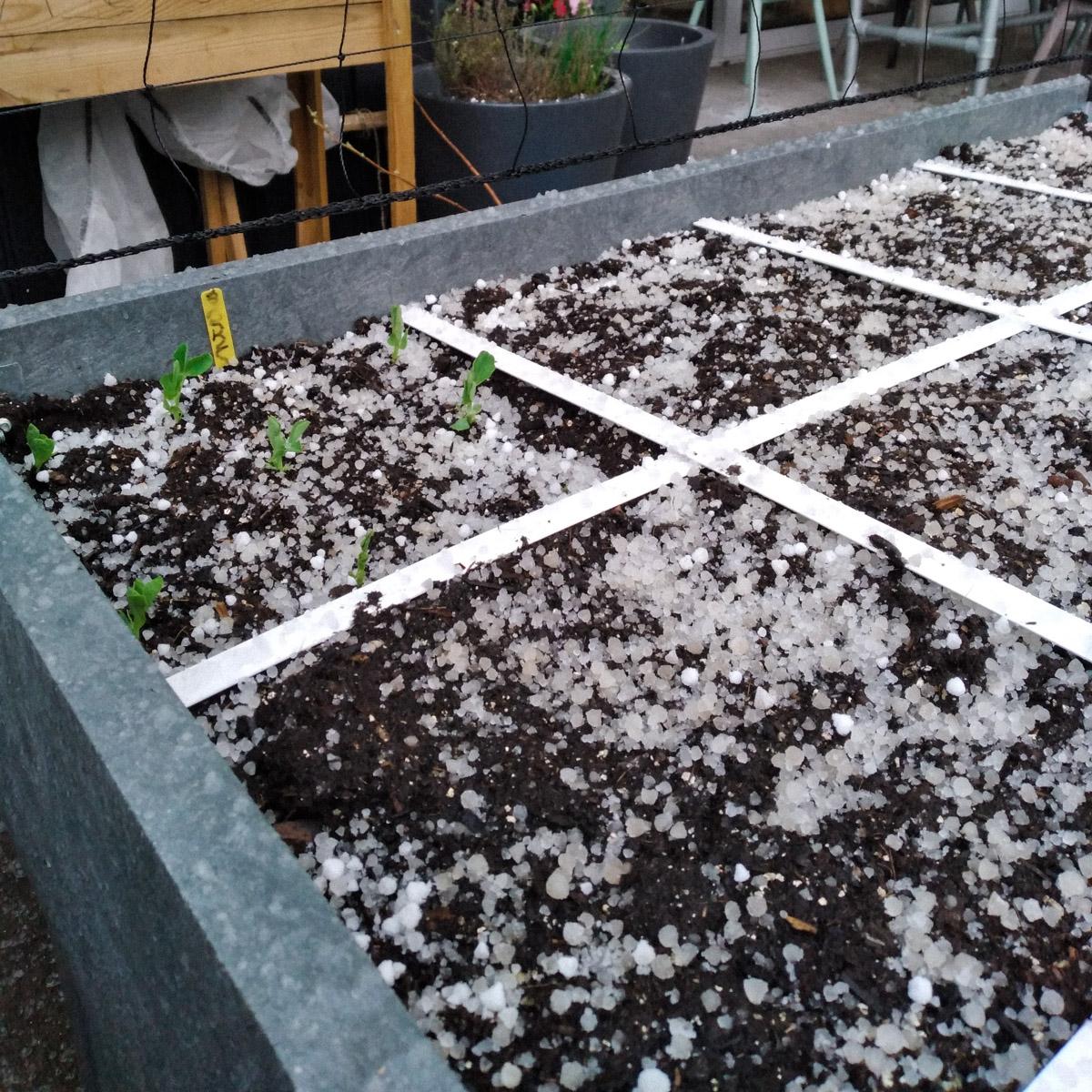Eind maart: hagel in de Makkelijke Moestuinbak
