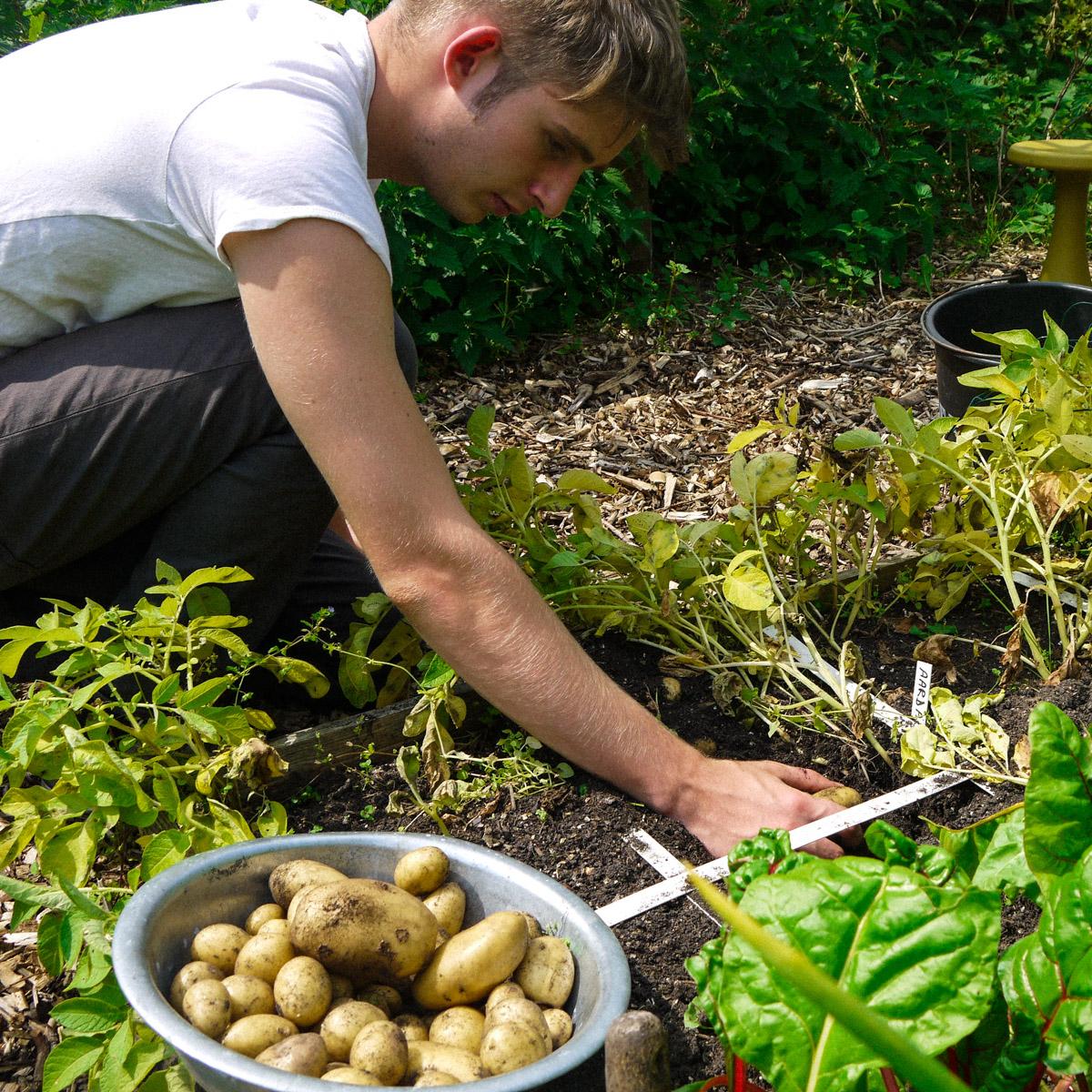 Aardappels telen in de Makkelijke Moestuin
