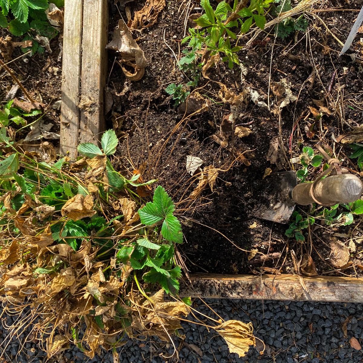 Weghalen van de pollen bosaardbeien