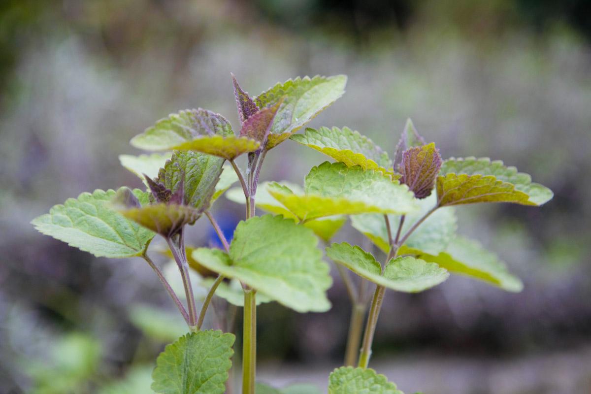 Dropplant van de Makkelijke Moestuin