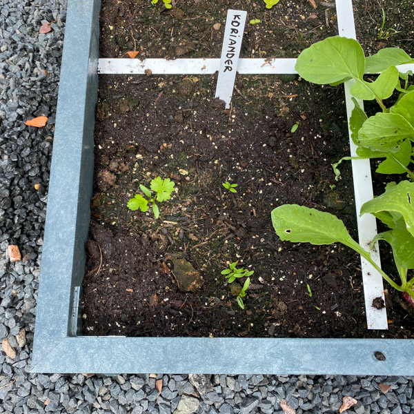 perfecte-plantjes-showtuin-7.jpg
