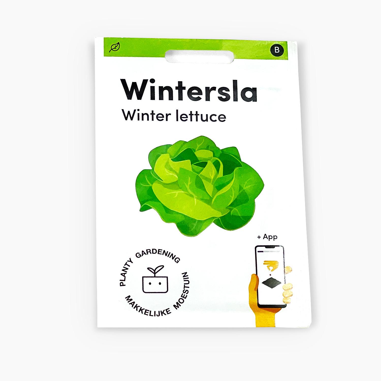 Wintersla.jpg