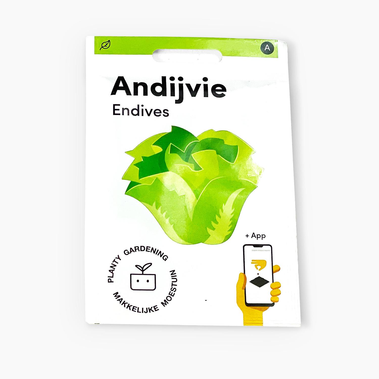Andijvie.jpg