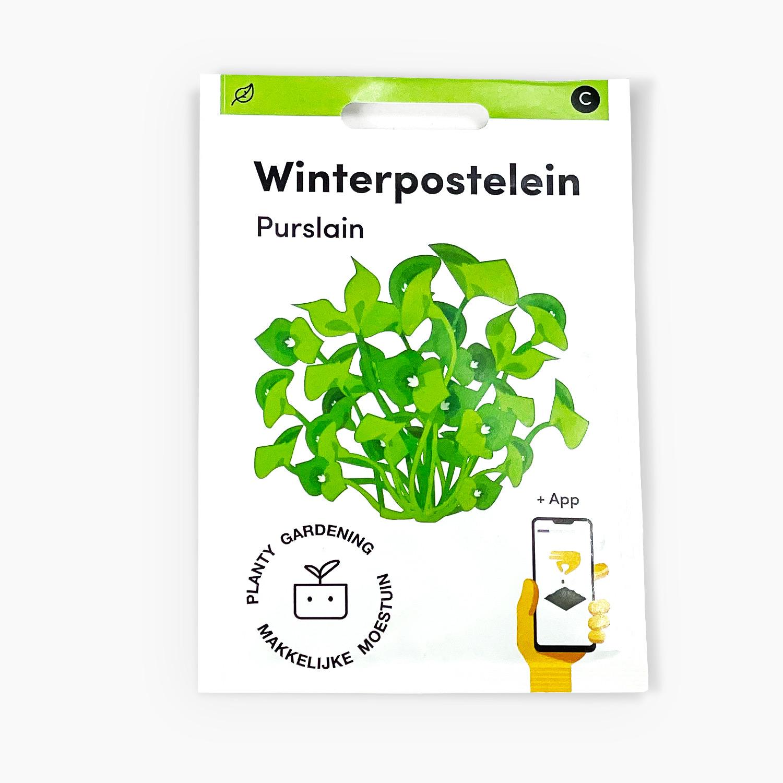 Winterpostelein.jpg