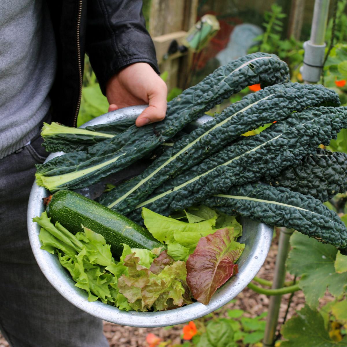 september-2017-oogst-MOM.jpg